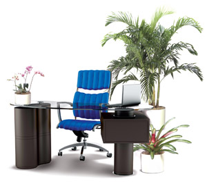 Office space transformed with indoor tropical plant design