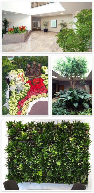 Interior Tropical Gardens plant rentals maintenance and sales examples