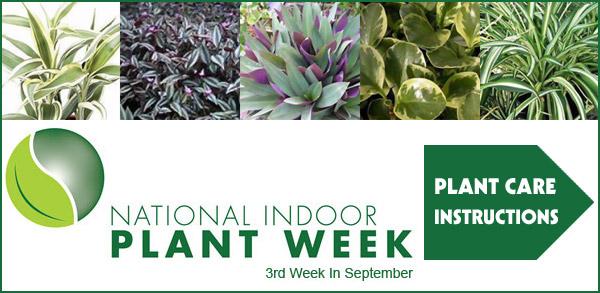 Chicago Region Interior Tropical Plant Design Displays And Rentals Interior Tropical Gardens