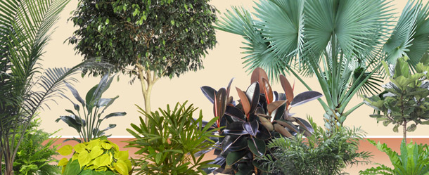 Chicago region interior tropical plant design displays for Planta tropical interior