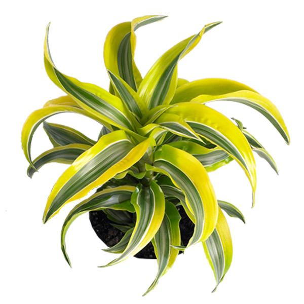 Tropical indoor plants low light flowerpot with nest fern for Classic house plants